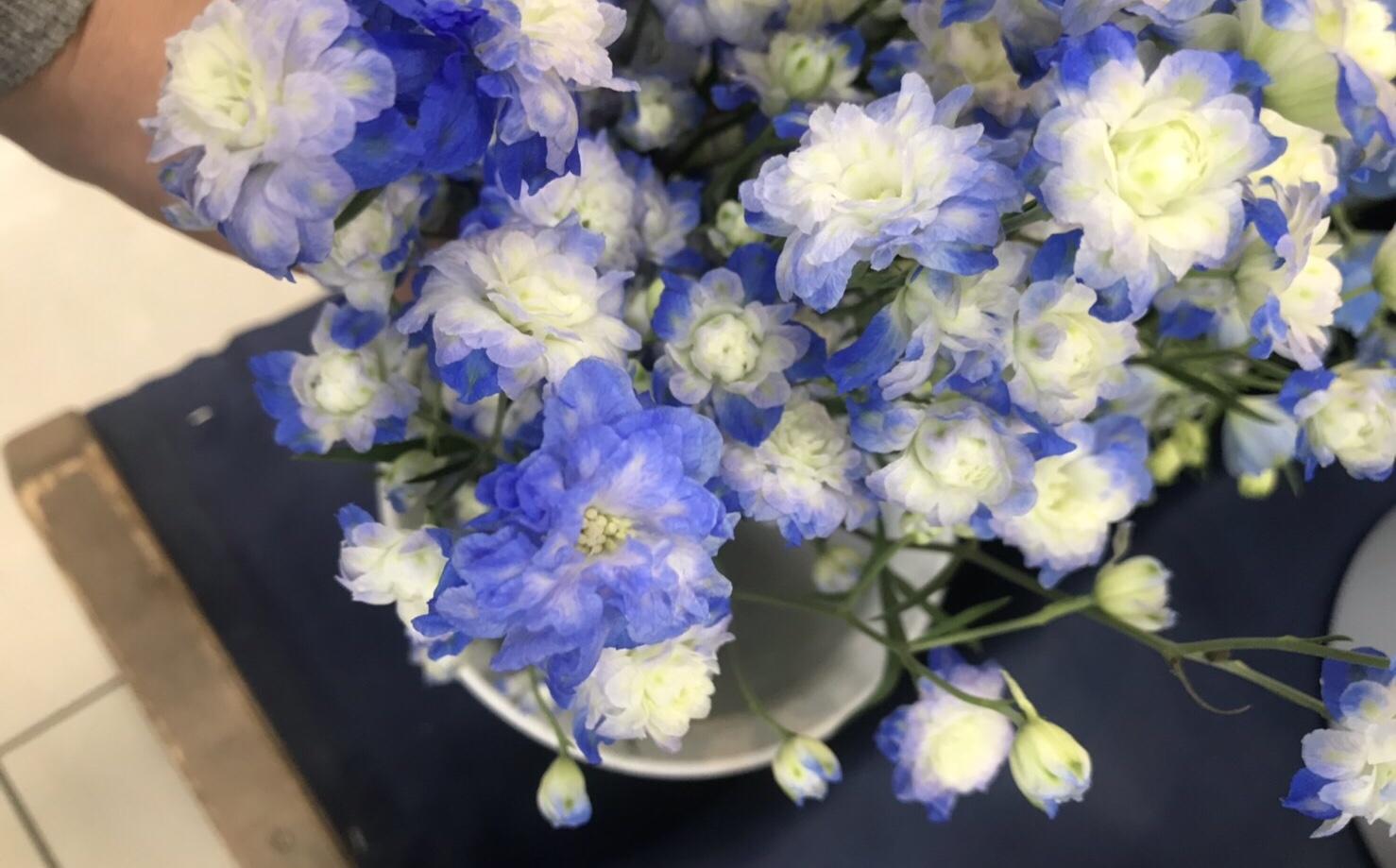 今日入ったお花たち