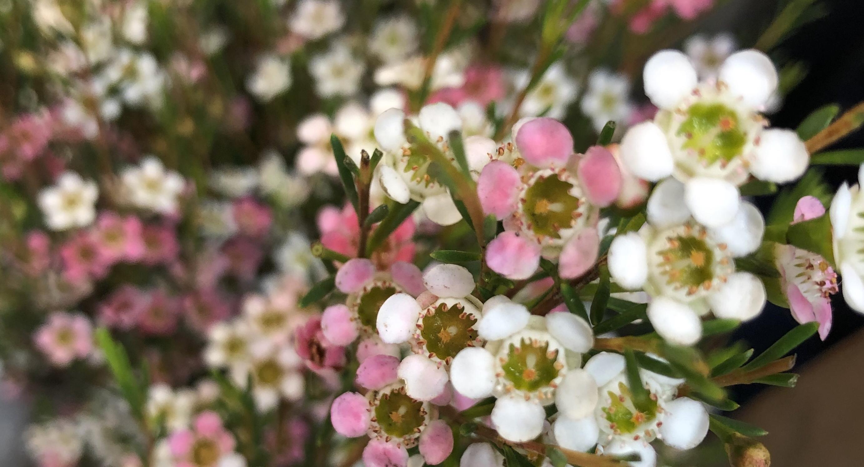 生け花の花材、揃えます。