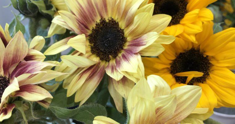 今日の仕入れ花